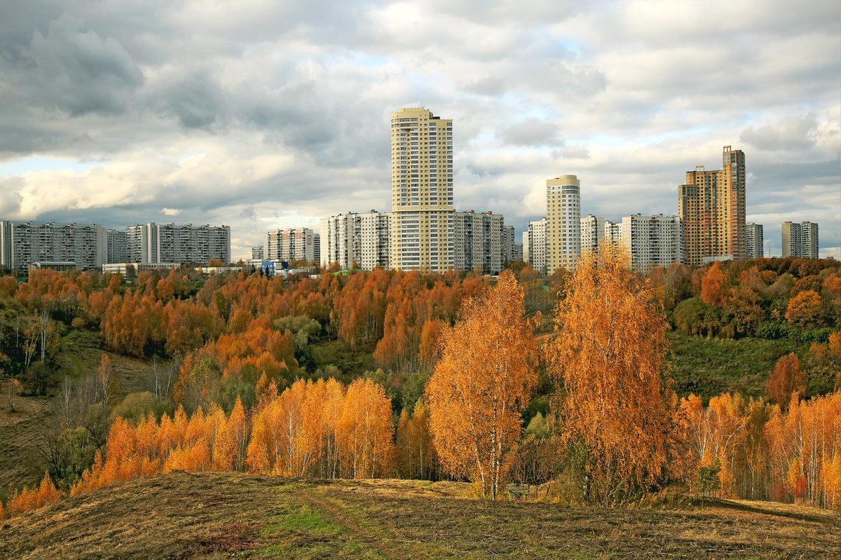 крылатский парк фото поздноцветущий сорт сентябрь