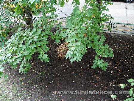 БЛИЦ: уборка осенней листвы во дворе домов 10 корп.1 и корп.2 по Осеннему бульвару