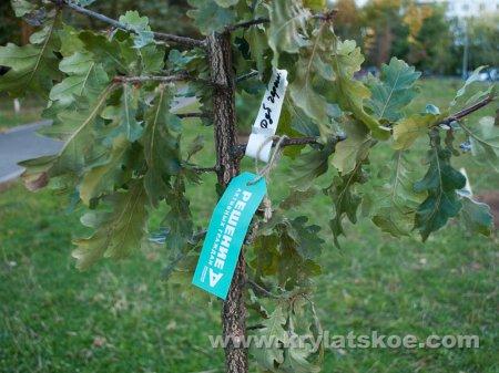 ФОТОРЕПОРТАЖ: Посадки деревьев в Крылатском